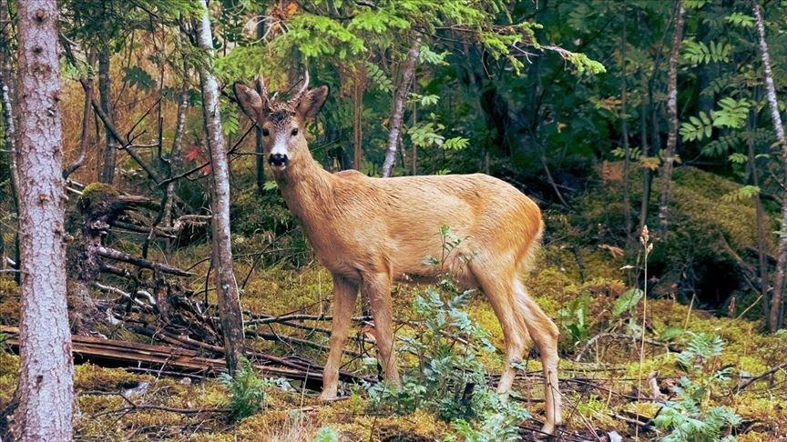 Akılalmaz olay… Beslediği geyik sonu oldu!