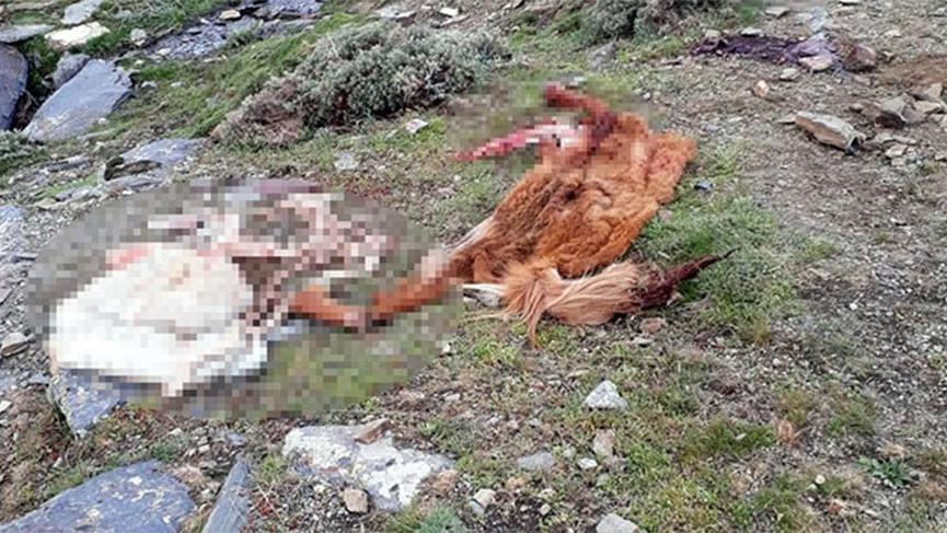 Kamyonette 800 kilo at eti ile yakalandılar