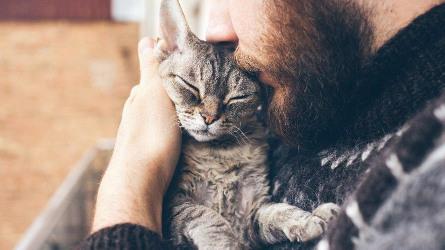 Azerice'de kedi ne demektir? 25 Nisan Oyna Kazan kopya sorusu…