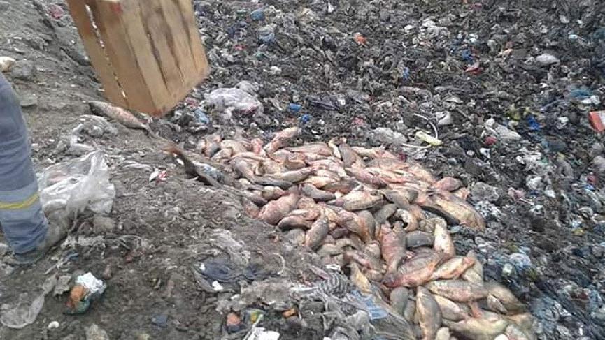 Elazığ'da 900 kilo kaçak balık ele geçirildi