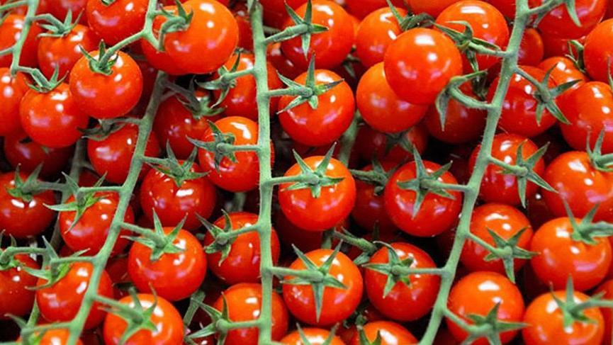 Ukrayna, 38 ton Türk domatesini geri gönderdi