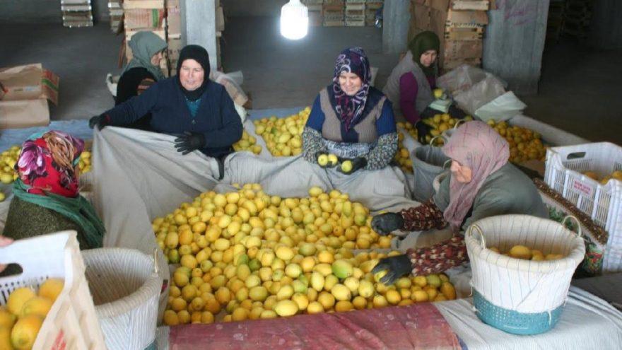 Türkiye'nin gündemi limon!
