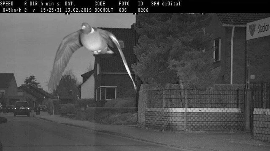 Sosyal medya bu görüntüyü konuşuyor! Hız sınırını aşan güvercin kameraya yakalandı