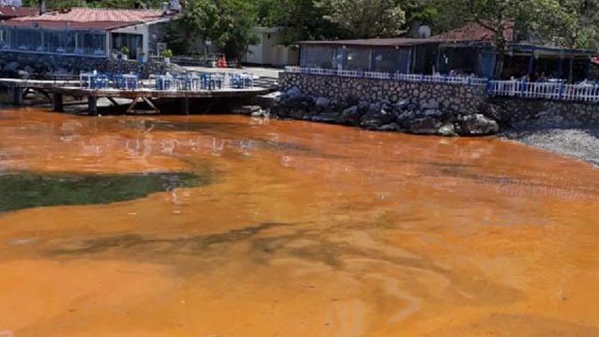 Alg patlaması, Mudanya sahilini kızıla boyadı