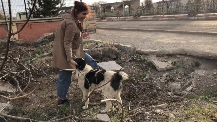 'O bir sokak köpeği değil, bir can'