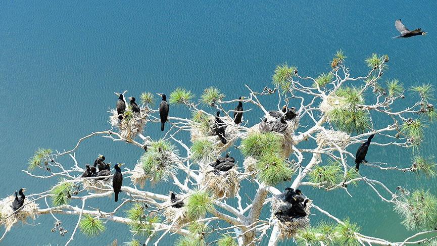 Saklı cennet'teki kuş sayısında rekor artış