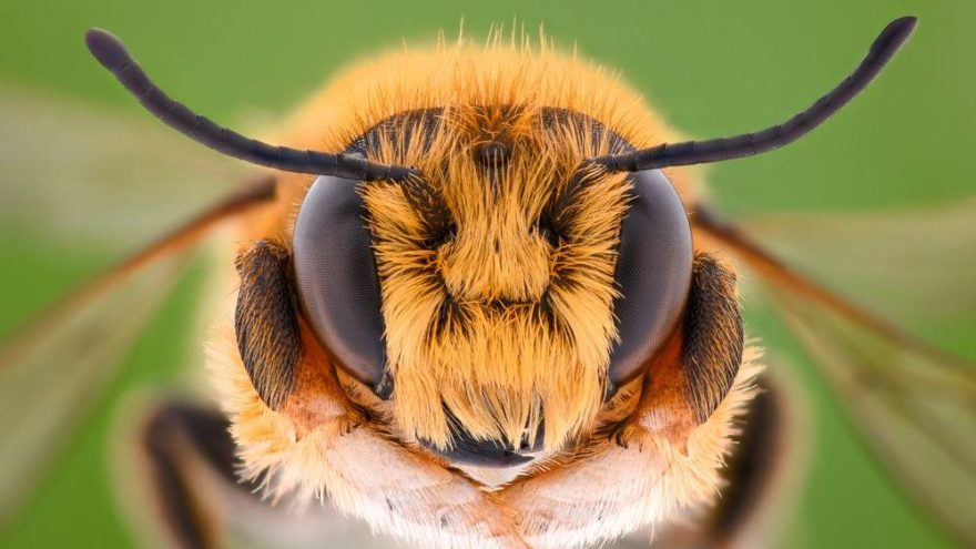 'Arılar varsa yarınlar var'