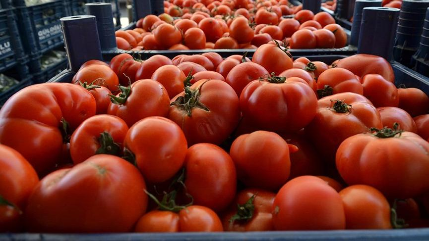 Rusya 21 ton domatesi geri gönderdi