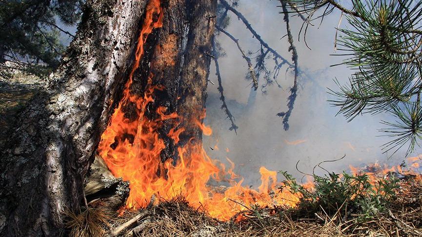 Muğla'da orman yangını! Çevre illerden destek geldi