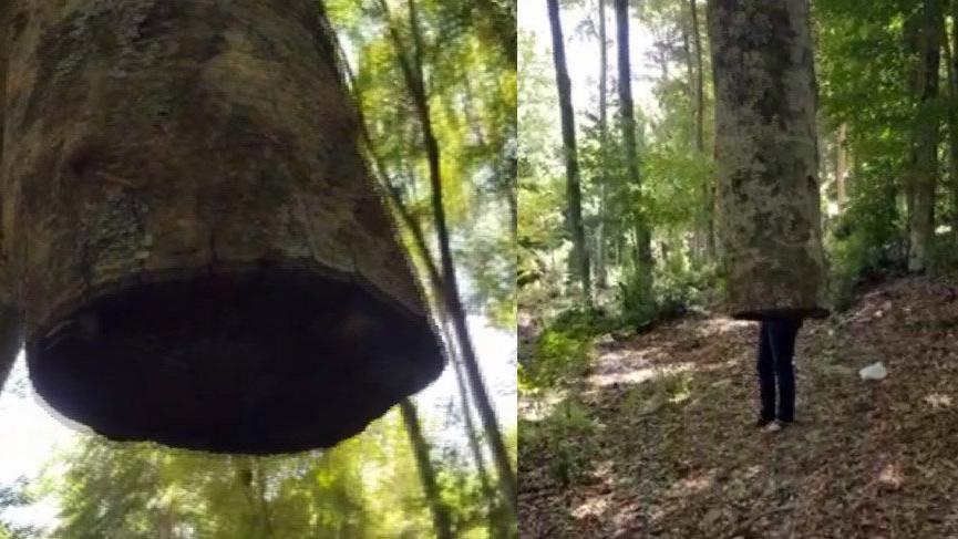 Havada duran ağaç görenleri şaşkına çeviriyor