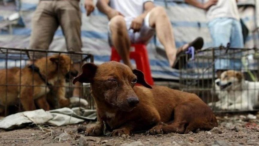 Hayvanseverlerden tepki: #yulinkatliamınahayır