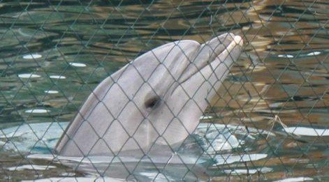 Yunuslara Özgürlük Platformu: Tematik akvaryumlarda yunus ve balina esareti yasaklansın