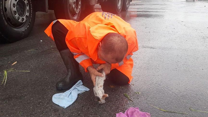 Sel sularına kapılan yavru kediyi suni teneffüsüyle hayata döndürdü