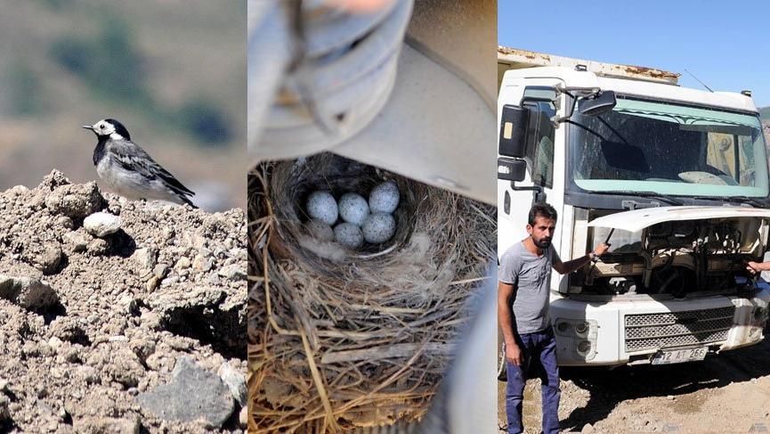 Kamyon motoruna yuva yapan kuşun 5 yavrusu oldu