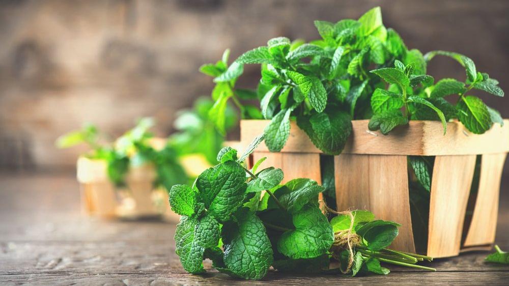 Nanenin faydaları nelerdir? Nanenin besin değerleri ve vücuda yararları