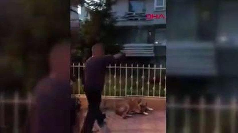 Kadıköy'de köpeği tekmeleyen caniye bin 763 TL ceza verildi