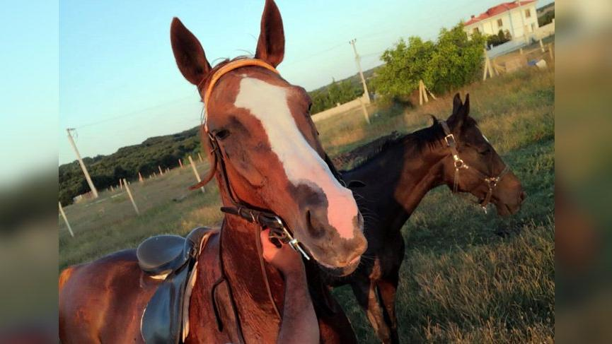 Kayıp yarış atı kesilmiş halde bulundu!