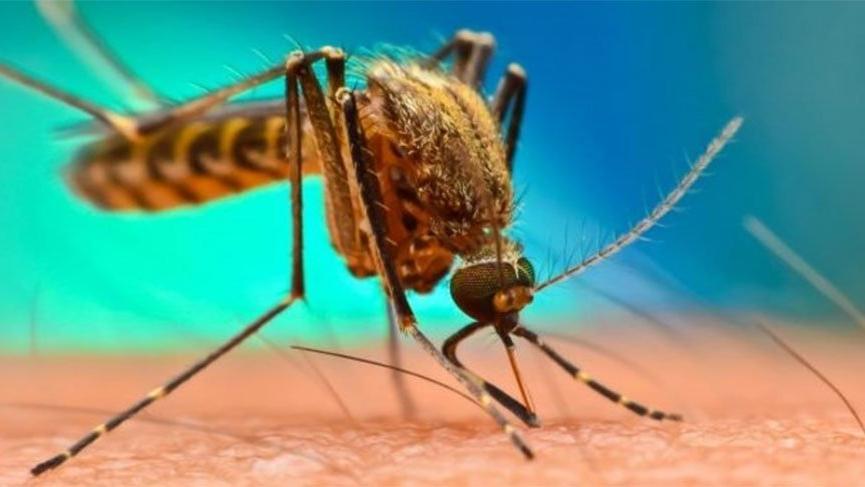 Batı Nil Virüsü ile mücadele çalışmaları artırıldı