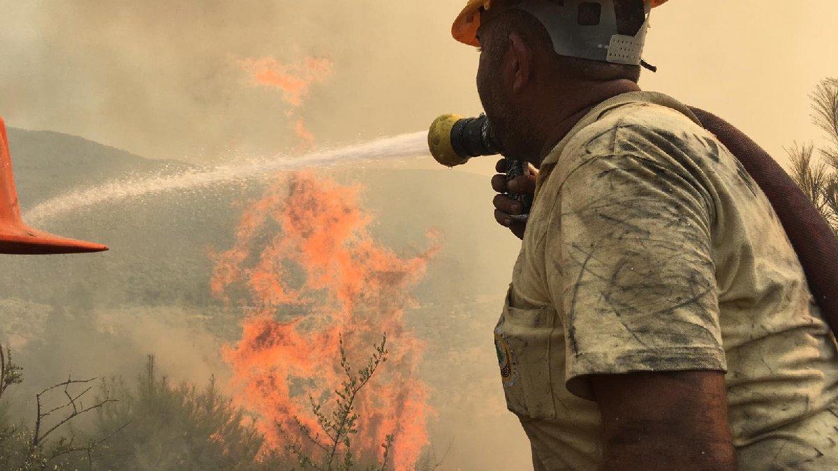 Son dakika... Bodrum'daki orman yangını kontrol altına alındı!