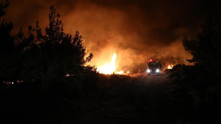 Son Dakika... Tarihi Gelibolu Yarımadası'nda orman yangını
