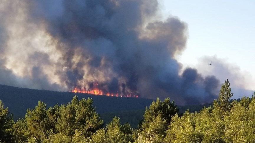 Son Dakika... Tavşanlı'da orman yangını! Hızla büyüyor