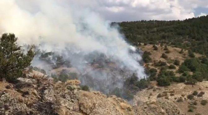 Bayburt'ta korkutan orman yangını!