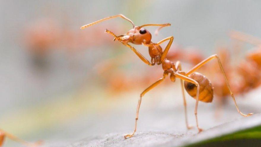 Evdeki karıncalardan kurtulmak için ne yapmalı?