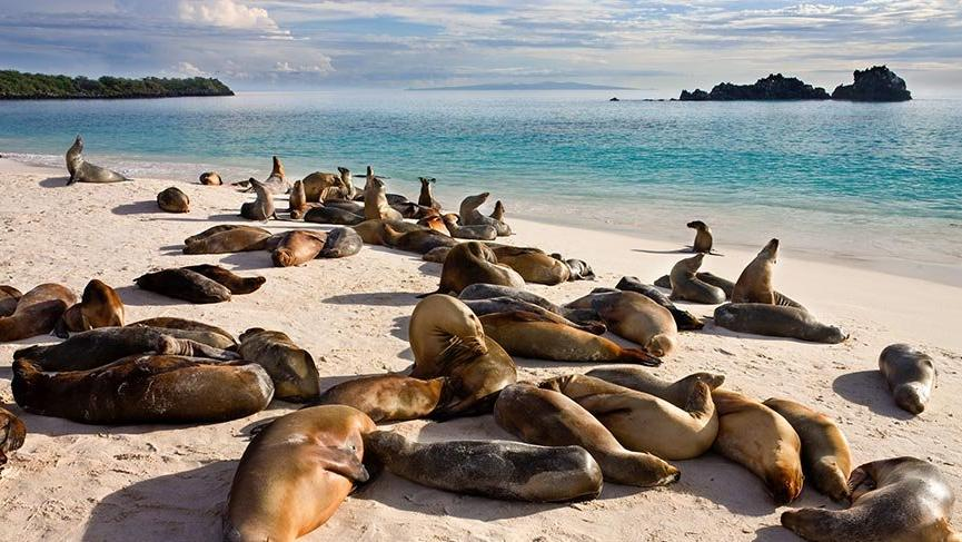 Gizli kalmış fantastik dünya: Galapagos Adaları