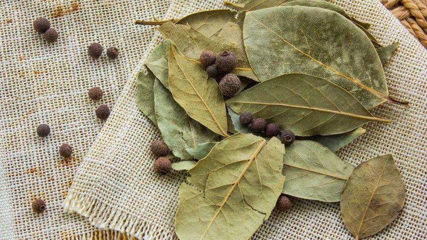 Defne yaprağının faydaları nelerdir? Defne yaprağının içinde hangi vitaminler bulunur?