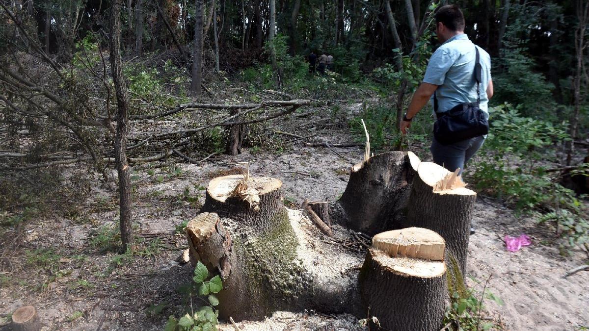 Edirne'de ağaç kesen canilere foto kapanlı önlem