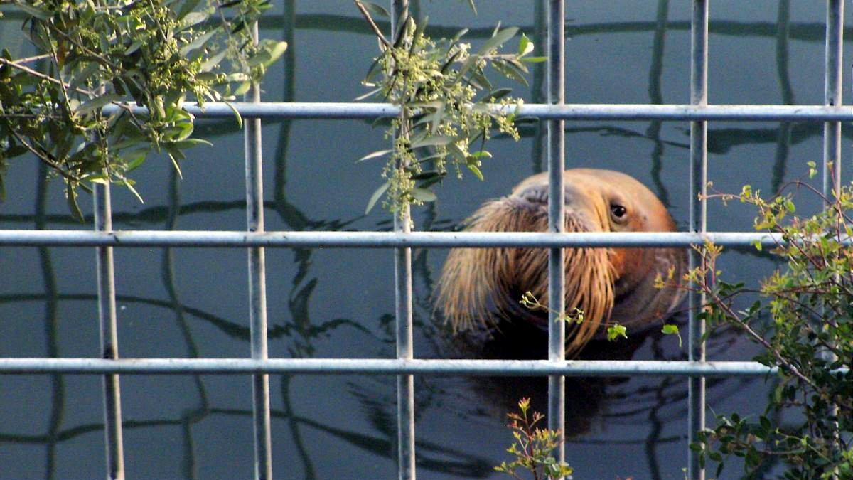 Bodrum Yunus Parkı'nın kapatılması için 71 bin imza