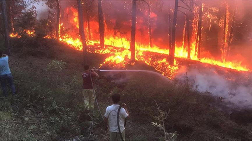 Uşak'ta orman yangını! Kontrol altına alındı