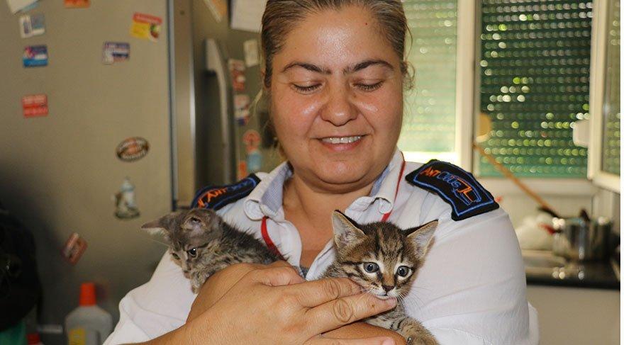engelli iki yavru kedisiyle halk otobüsü şoförlüğü yapıyor ile ilgili görsel sonucu