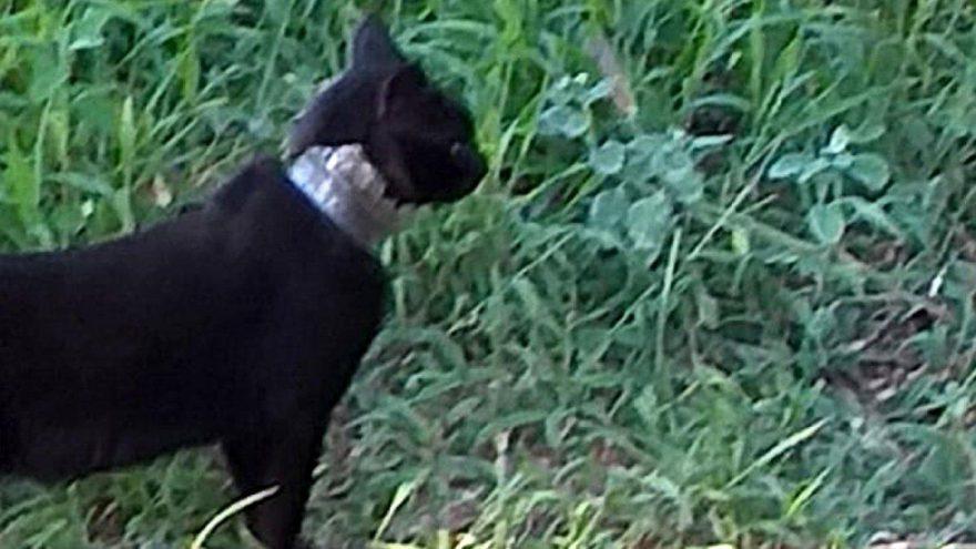 2 aydır, boynundaki camla yaşayan kedi kurtarıldı