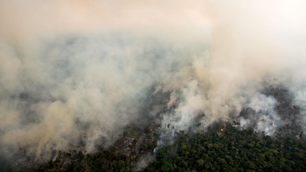 Orman yangınları iklimi nasıl etkiliyor?