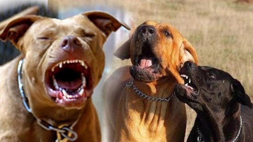Bu köpekleri besleyenlere 7 bin 802 lira ceza