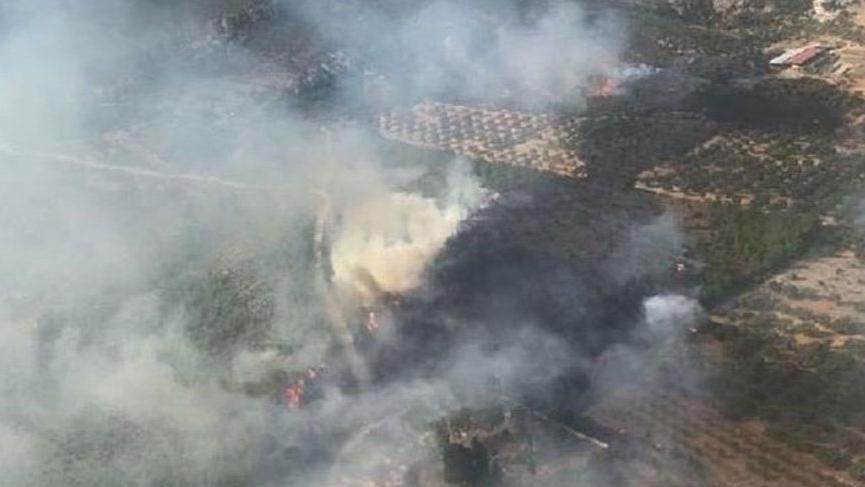 Besi çiftlikleri yakınında yangın!