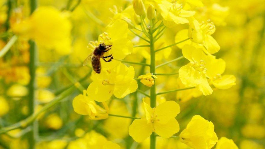 Arı sütü kaç kalori? Arı sütünün besin değerleri ve kalorisi