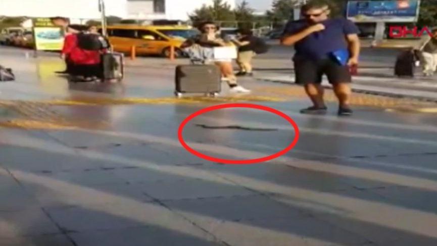 Havalimanında yılan paniği!