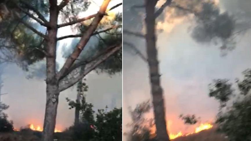 Son dakika... İstanbul'da orman yangını!