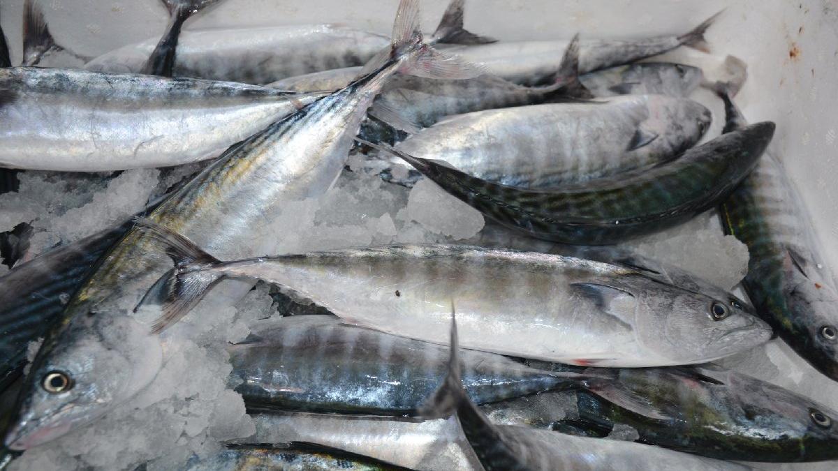 Uzmanlar balık sektöründeki değişim amaciyla ne diyor?