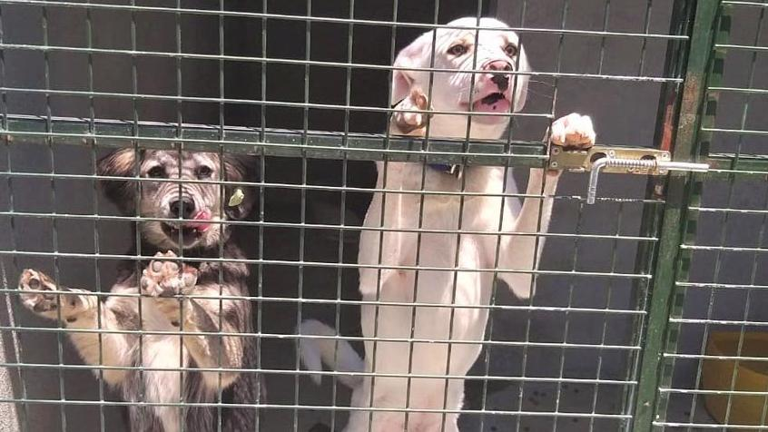 Marmaris hayvan barınağına suç duyurusu