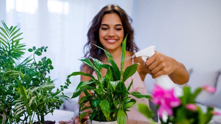 Salon çiçeklerini canlandıran karışım nasıl yapılır?