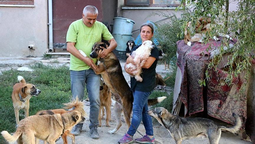 Örnek çift: Emekliliklerini sokak köpekleri için harcıyorlar