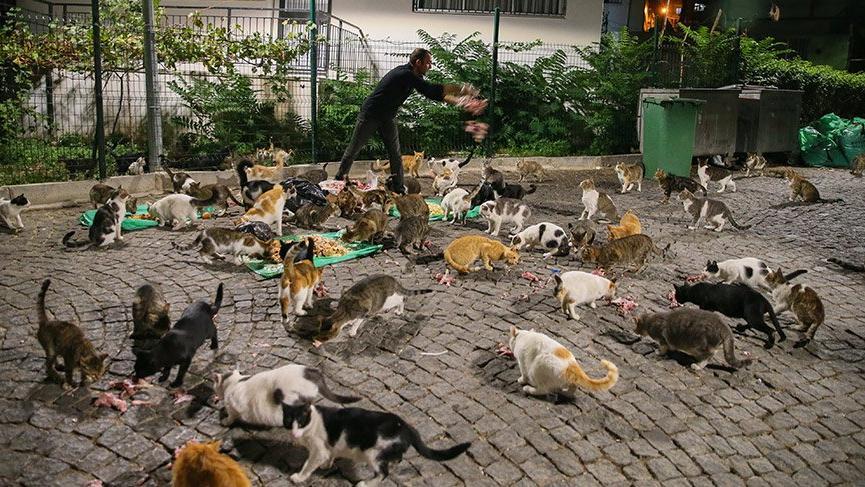 Sokak sokak dolaşıyor, yüzlercesini doyuruyor