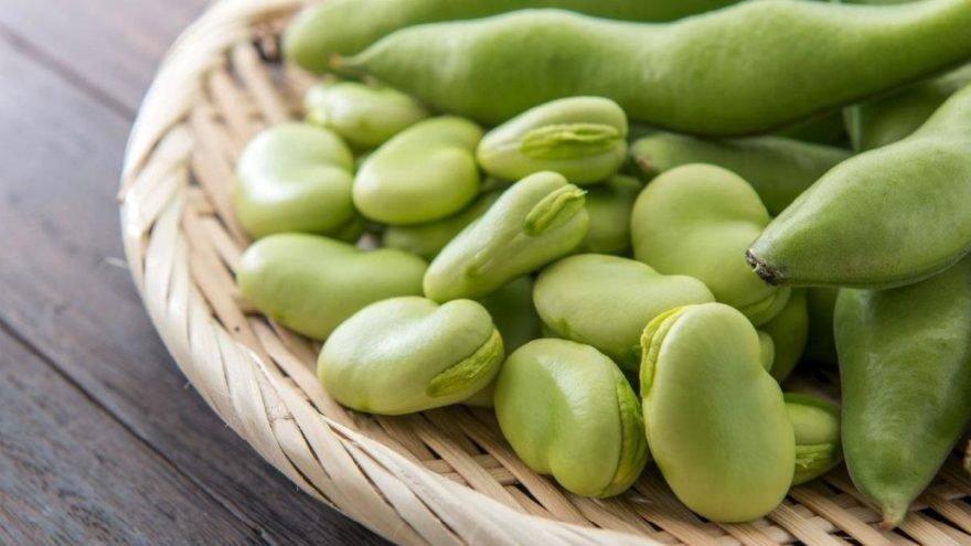 Bakla kaç kalori? Baklanın besin değerleri ve kalorisi…