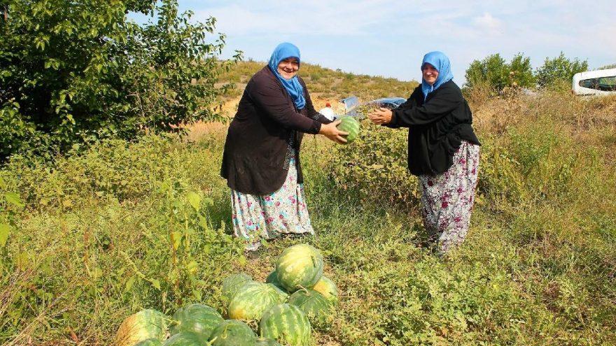 Dünya Kadın Çiftçiler Günü kutlanıyor