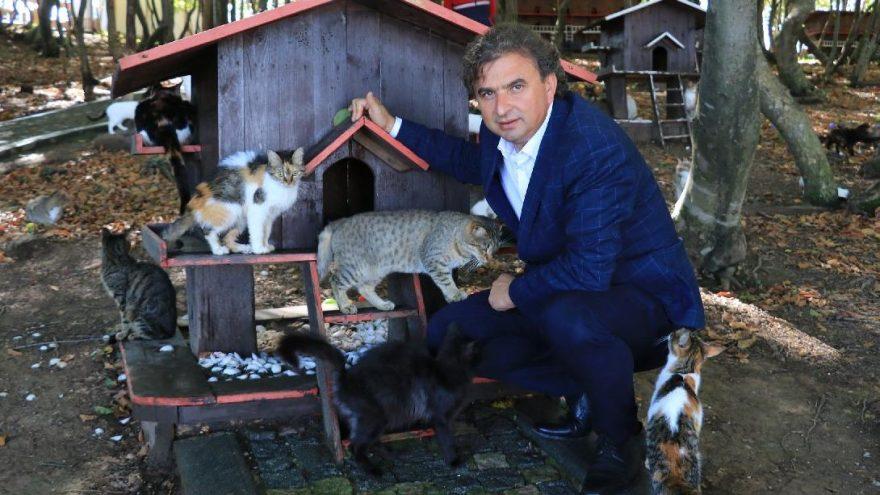 20 dönümlük alan üzerine kurulu 'Kedi Kasabası'