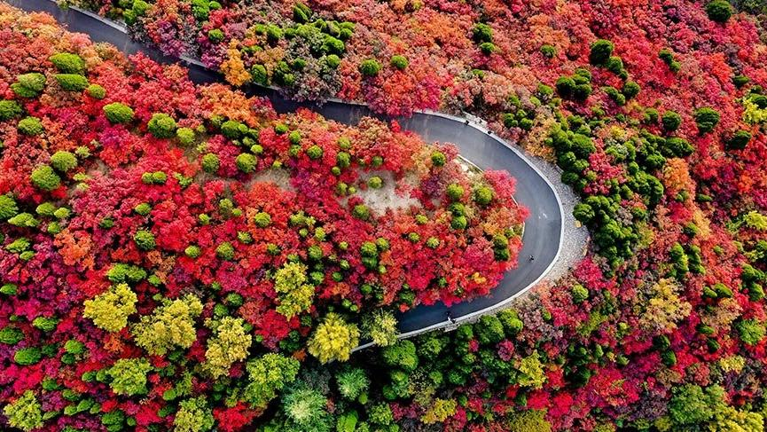 Kırmızı Yapraklar Vadisi'nde sonbahar