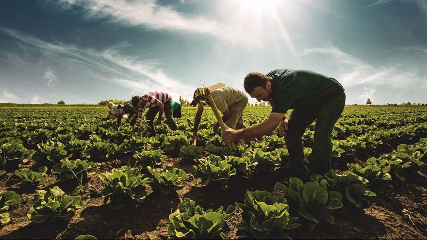 'Borcunu ödeyemeyen çiftçiler icralık oldu'